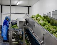 7b85c54-vyrobnytstvo-salatu-mcdonalds