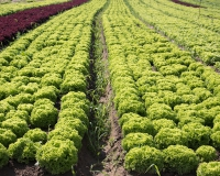 9436ab1-mcdonalds-salat1