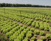 c1f0b45-salat-zroshennia