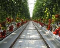 https_%2F%2Fs3-ap-northeast-1.amazonaws.com%2Fpsh-ex-ftnikkei-3937bb4%2Fimages%2F1%2F1%2F0%2F3%2F5883011-1-eng-GB%2F20150223_tomato007