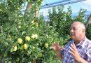 Буковинські яблука продають в усьому світі (фото)