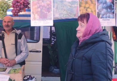 Фермер поблизу Рівного має дивовижні плантації з сотнями сортів винограду (відео)
