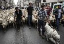 Тисячі овець заполонили центр французького міста (ФОТО)