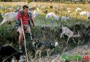 Пережив полон бойовиків: переселенець без руки і ноги виготовляє натуральні сири (фото, відео)