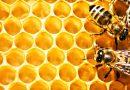 Поблизу Шацьких озер виготовлятимуть екологічний мед