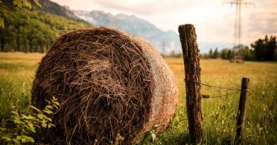 Top 6 facts about straw as an alternative energy source