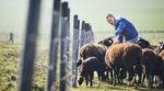 Государство увеличит финансовую поддержку «молодых фермеров»