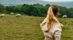 Овцы вместо газонокосилки: в Испании фермер использует животных для необычной работы