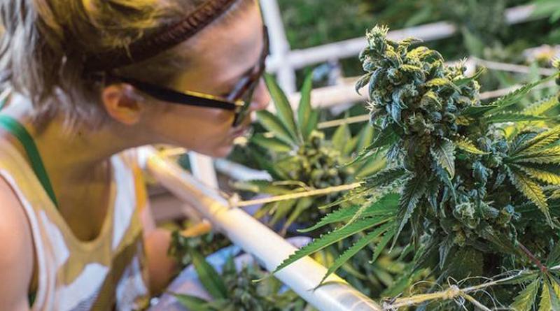 Конопля фермерского хозяйства стоимость 1 гр марихуаны