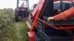 На Рівненщині фермер автоматизував збір ягід (відео)