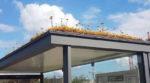 У Голландії для міських бджіл і джмелів облаштували острівці для відпочинку