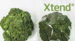 Британская компания разработала экологическую упаковку для транспортировки овощей и фруктов