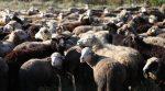 На Херсонщине фермер отобрал у крестьян пастбища для скота (видео)