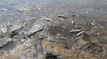 На Волыни скандальное предприятие выбросило тонны мертвой рыбы в реку (фото)