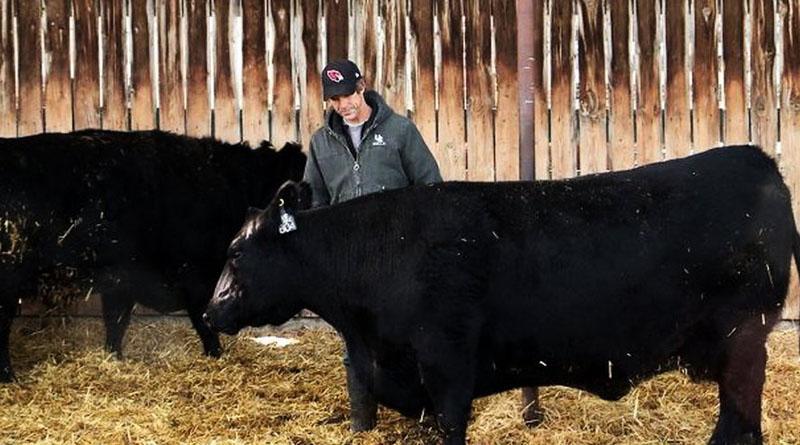 Елітна корова пішла з молотка за рекордну суму