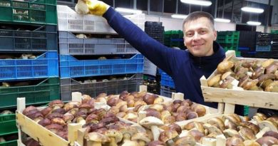 Success Story: Mushrooms from Hutsulshchyna Conquer the World