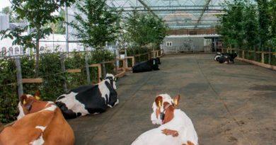 В Німеччині збудують перший корівник з садом