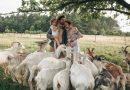 Молодий фермер власноруч майструє екстримальні гойдалки та розвиває екотуризм (відео)
