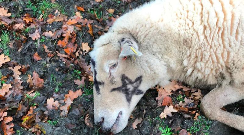 Жителі села налякані: люди знаходять трупи худоби з містичними символами