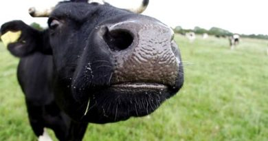 На Тернопільщині серед худоби поширюється сказ