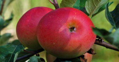 """""""Два яблучка на одному дереві"""": на Херсонщині розростається """"диво-сад"""""""