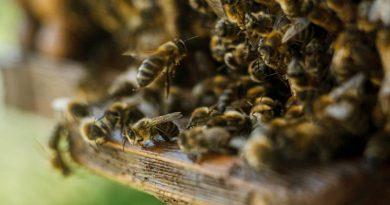 В Іспанії будують готелі для бджіл