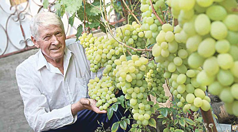 У саду вінницького фермера росте 60 сортів винограду