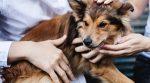 У США через карантин з притулків масово забирають тварин