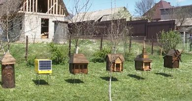 """A """"smart beehive"""" with solar panels was developed in Ukraine"""