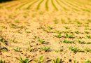 Чому аграрії досі не отримали компенсації за загиблий урожай