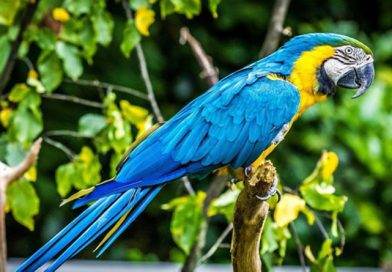 A court will question a parrot in a murder investigation in Argentina