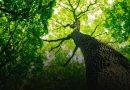 Нардепи ухвалили законопроект про національну інвентаризацію лісів