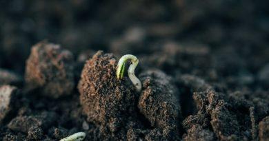 Названы наиболее подходящие для органического земледелия регионы Украины
