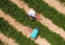 """""""Робот-стрибун"""": британські вчені розробили креативний апарат для обробки посівів (фото)"""