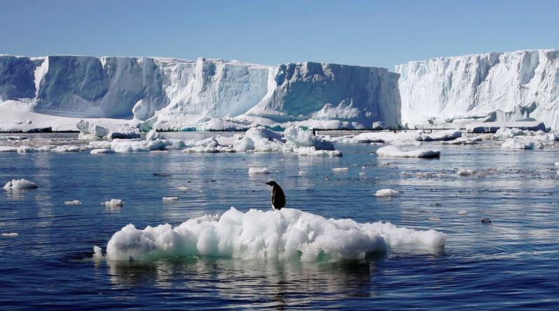 Кліматологи назвали тварин, які сприяють таненню льодовиків Арктики