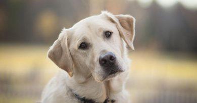 """""""Не рік за сім"""": вчені перерахували вік собаки в людський"""