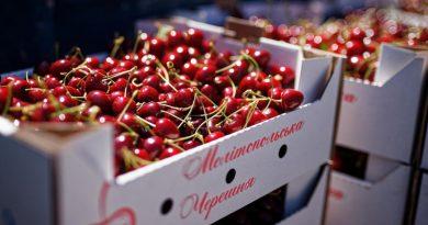Мелітопольська черешня офіційно визнана географічним брендом