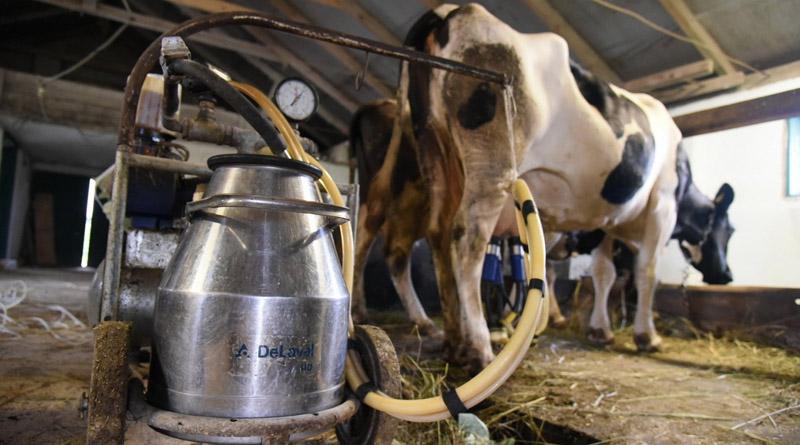 Фермери Рівненщини отримають фінансову допомогу: деталі