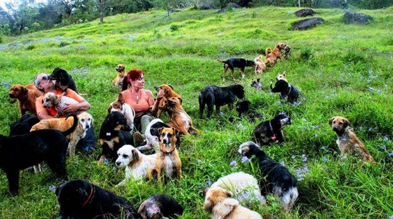 У горах Коста-Рики створили унікальний притулок з рідкісними породами собак (відео)