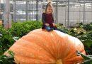 Вагою понад 1 тонну: фермери виростили рекордний гарбуз-гігант (фото)