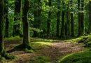"""""""Мелодія природи"""": в мережі з'явився сайт зі звуками лісів різних країн світу"""