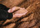 Українське насіння визнали еквівалентним до вимог ЄС