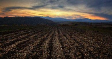 """""""Втрачають поживні речовини"""": експерти розповіли про стрімку деградацію українських ґрунтів"""